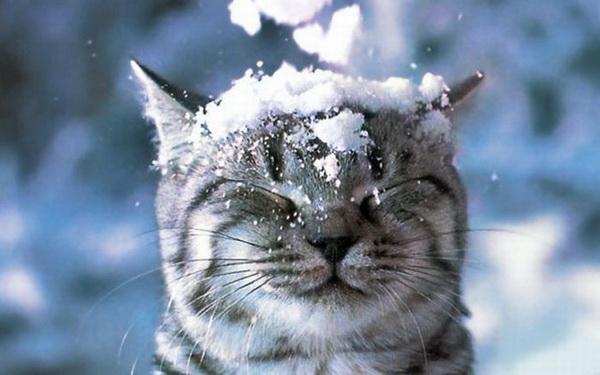 Happy winter! cute cat kitten snow sleep sweet baby pets animals | Kittens cutest, Cute animals, Animals
