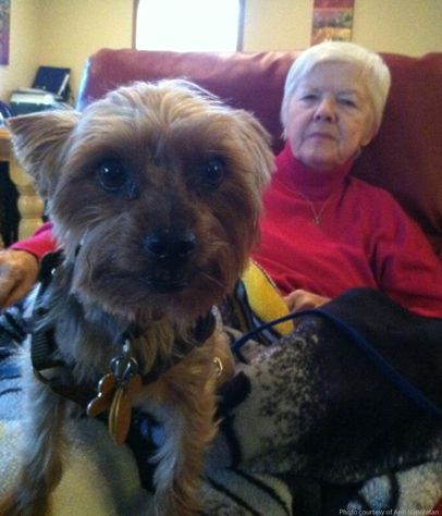 How Can Pets Benefit Alzheimer's?   Therapy animals ...