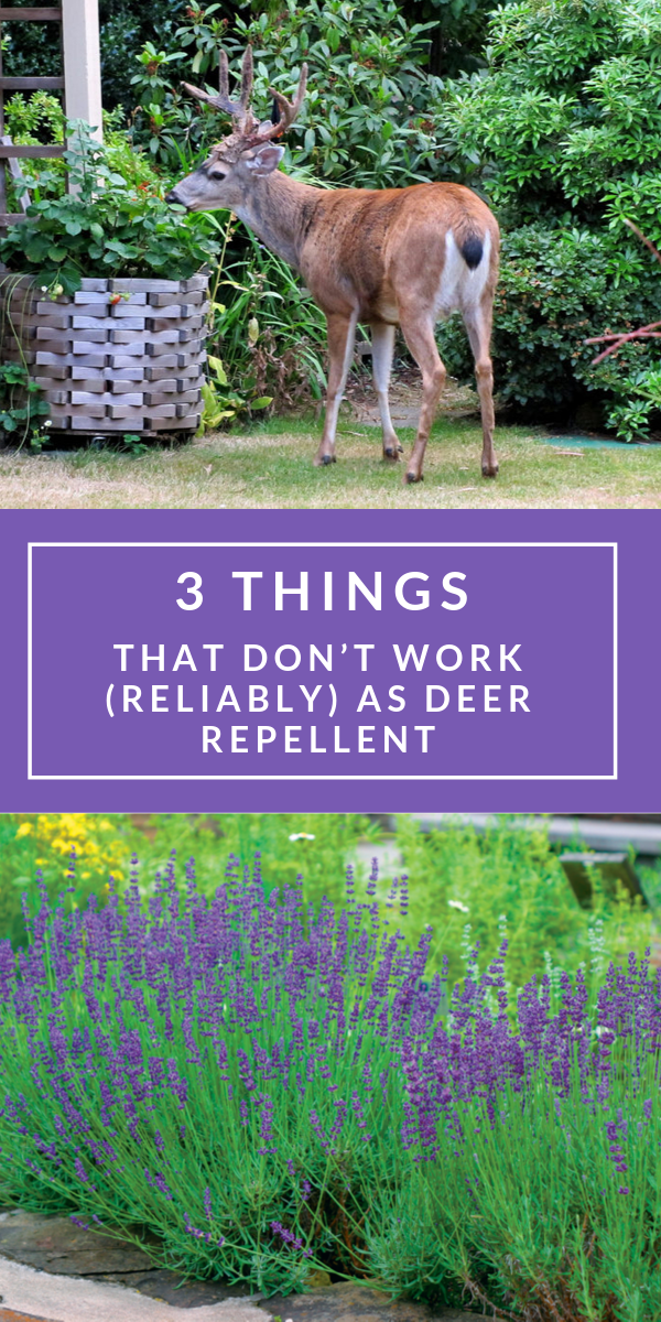 3 Things That Don T Work Reliably As Deer Repellent Deer Repellant Deer Resistant Plants Deer Deterent