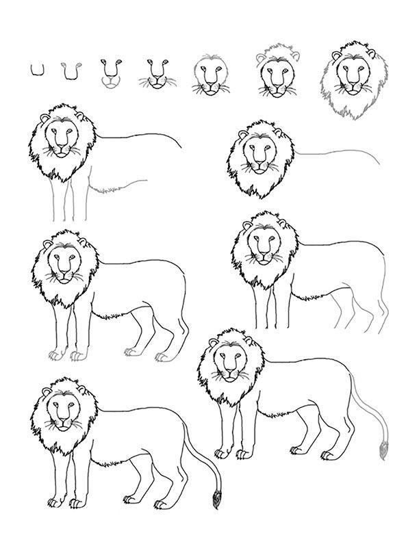 24 Adet Adim Adim Kolay Hayvan Cizimleri Drawing Lessons Hayvan