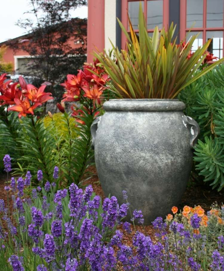 Amenagement De Jardin Mediterraneen Plantes Et Fleurs