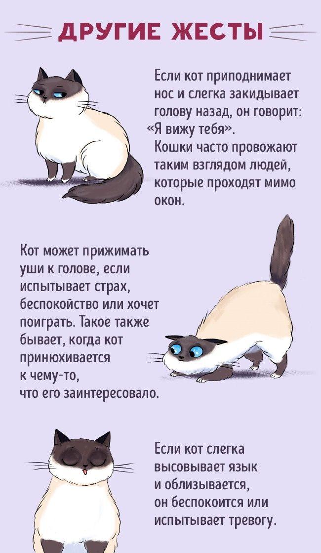 службы я говорю по кошачьи картинка редкое