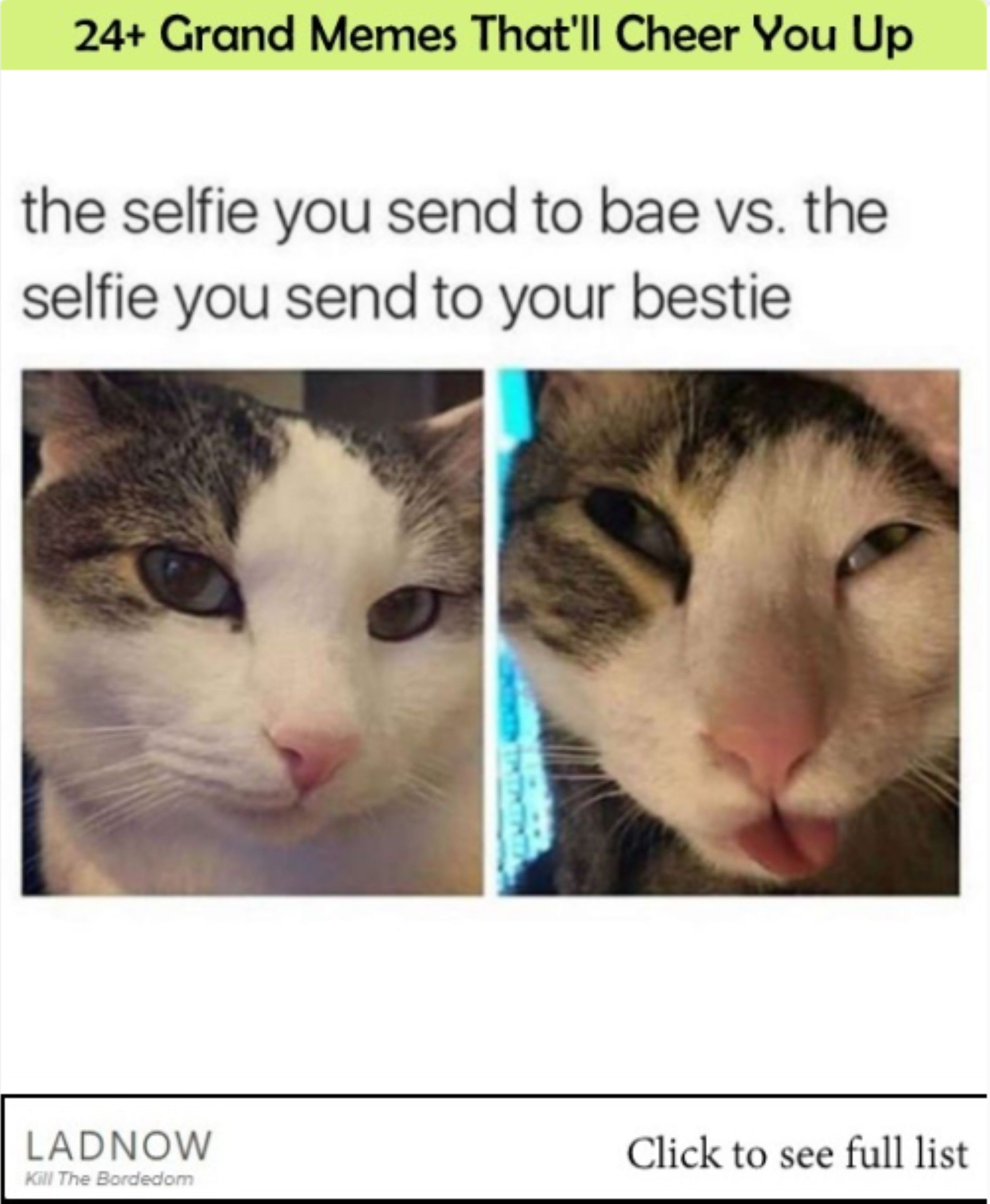 24 Grand Memes That Ll Cheer You Up Ladnow Cheer You Up Memes Funny Cat Memes