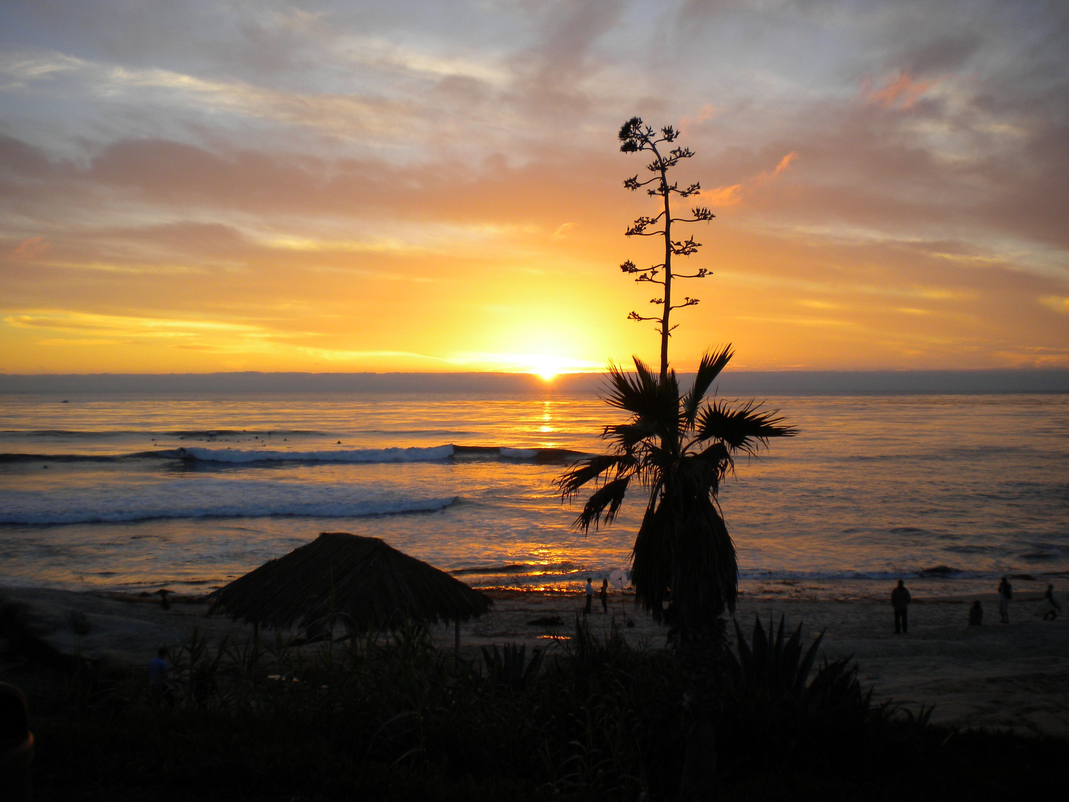 La Jolla, Ca (With images) Nature, Places to travel, Outdoor