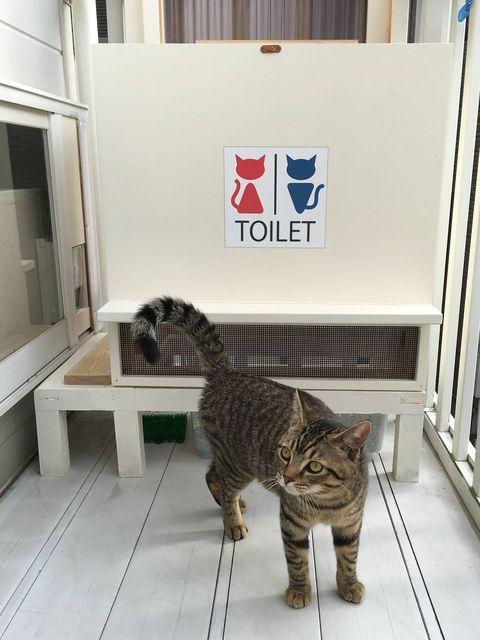 猫のトイレをdiyしたでー Cat Sanctuary Cat Toilet Cats