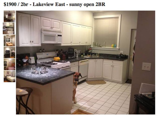 This Photobombing Dog Is The Best Thing To Happen To Craigslist In A Long Time Apartment Listings Apartments For Rent Apartment Life