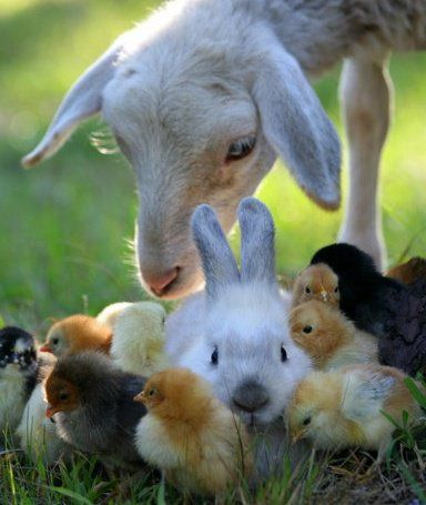 Happy Easter Animals Cute Animals Baby Animals