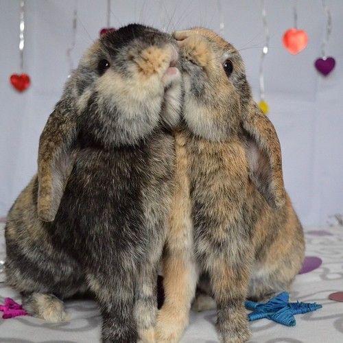 Your 1 Source For Fluffy Animals Animais Coelho Lebre