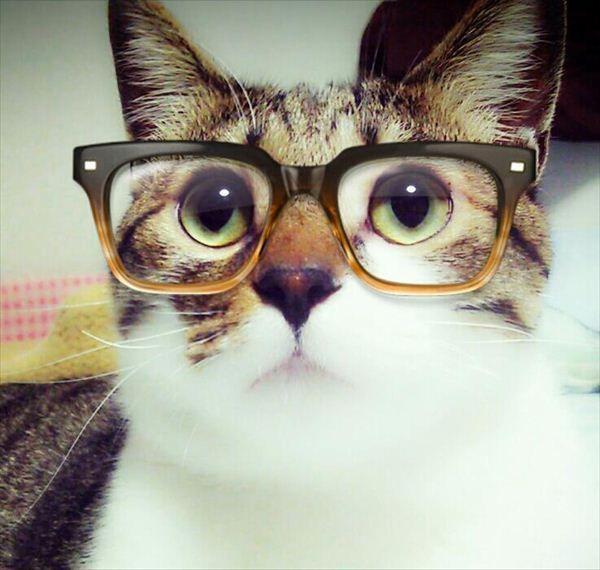 Cat wearing glasses  Follow us @showmeCats #showmecats #thebeauty @klistashaban thought of you :)