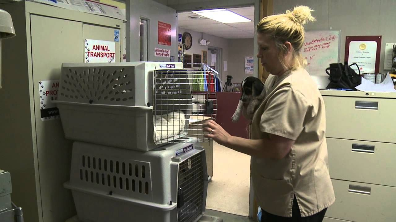 Local Animal Shelter Forced to Euthanasia Animal shelter