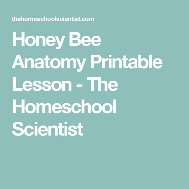 Honey Bee Anatomy Printable Lesson - The Homeschool Scientist | clil ...