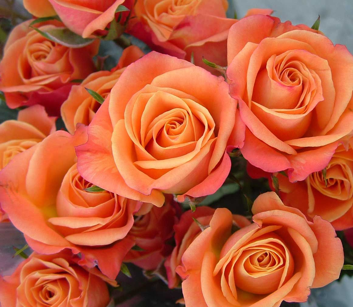 Orange spray roses orange flowers pinterest spray for Flower sprays for weddings