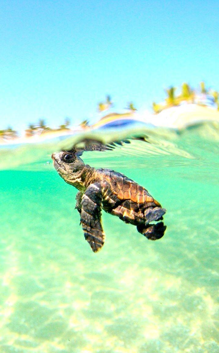 Sea Turtle Desktop Wallpaper Черепашата, Милые детеныши