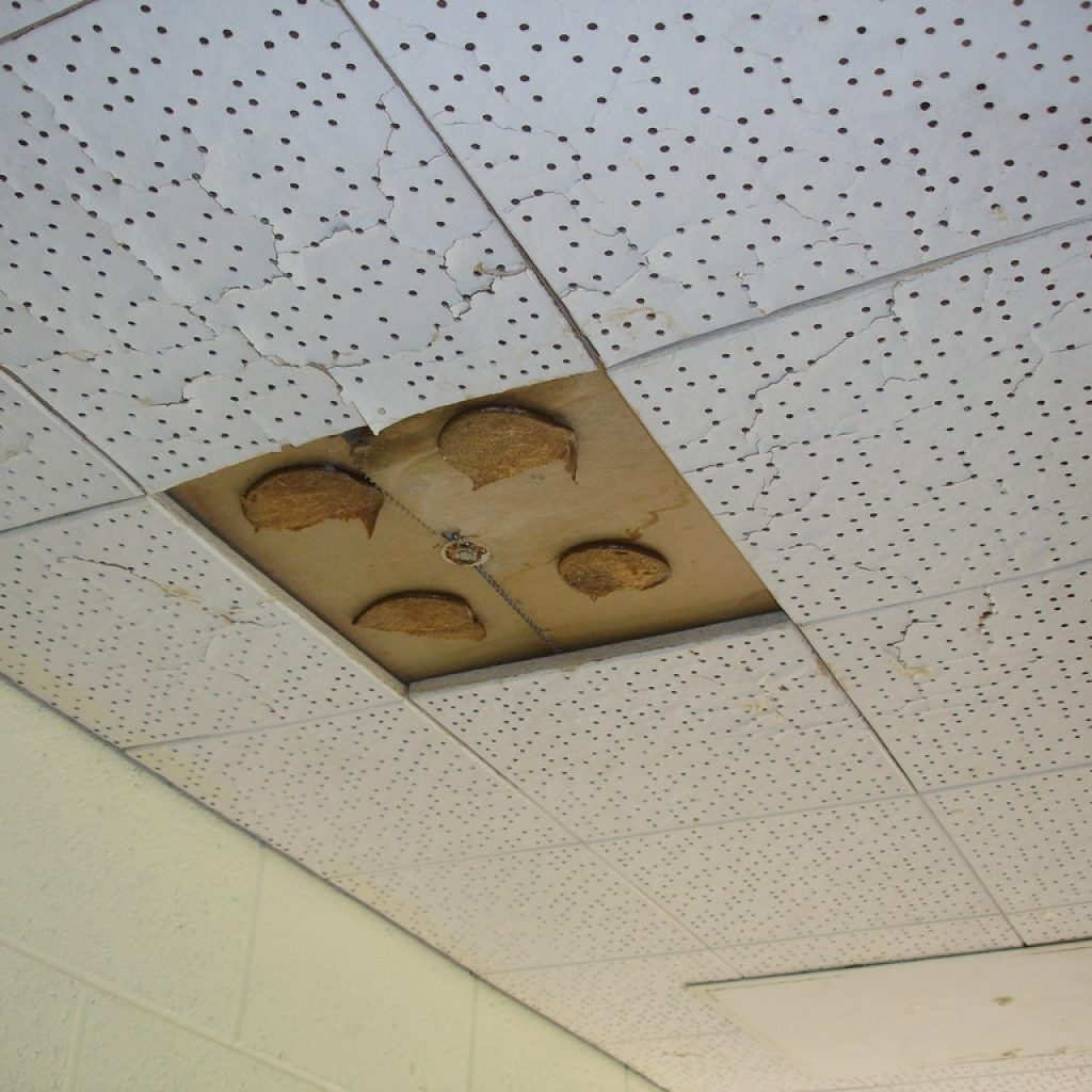 Acoustical ceilings tiles containing asbestos http acoustical ceilings tiles containing asbestos dailygadgetfo Choice Image
