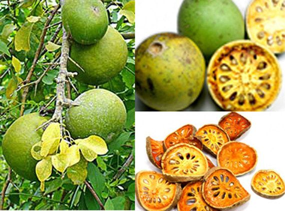 aegle marmelos diabetes cure