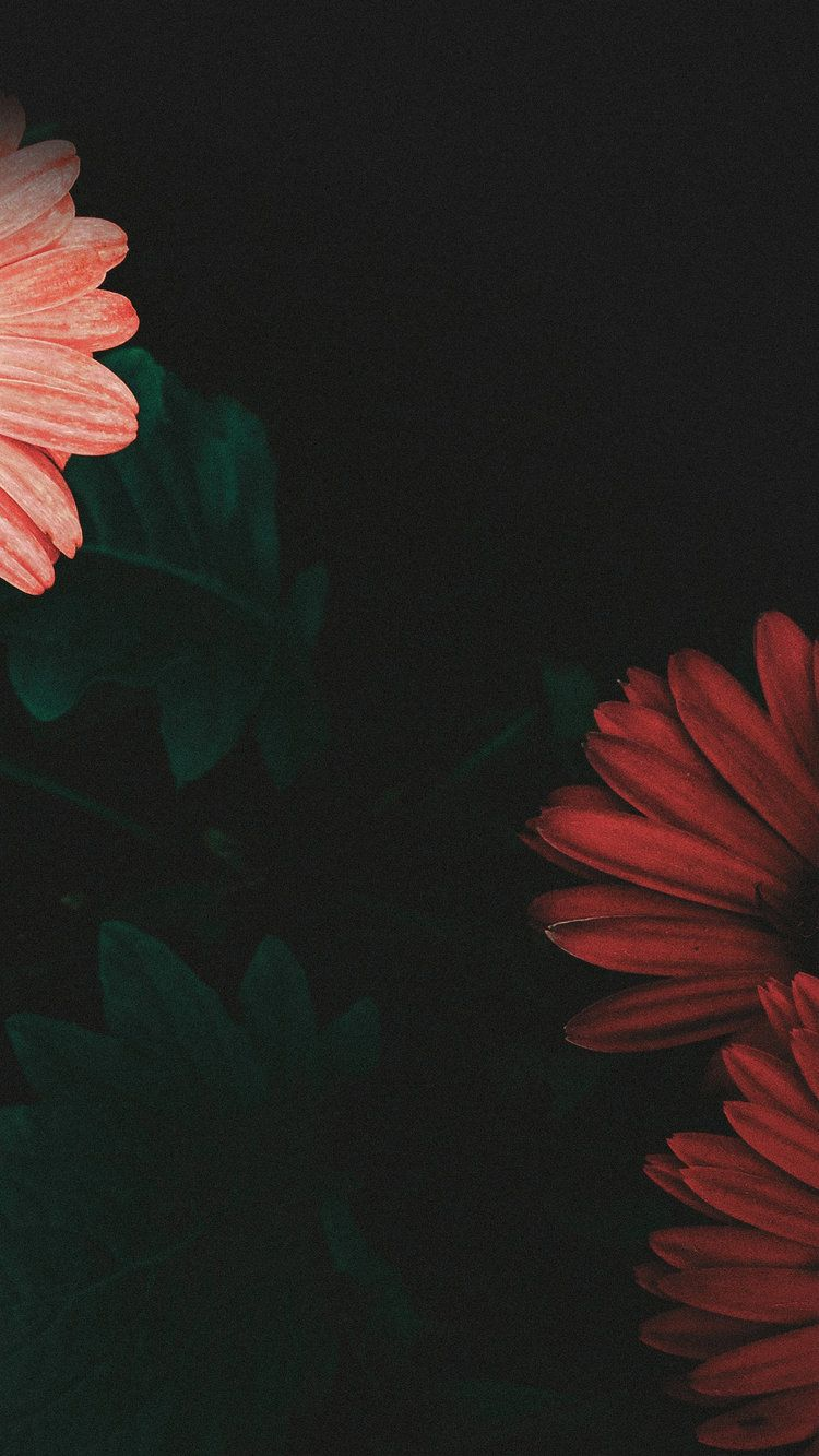 Iphone 6 Plus Iphone 6s Plus New Wallpaper Iphone Backgrounds Phone Wallpapers Flower Background Wallpaper