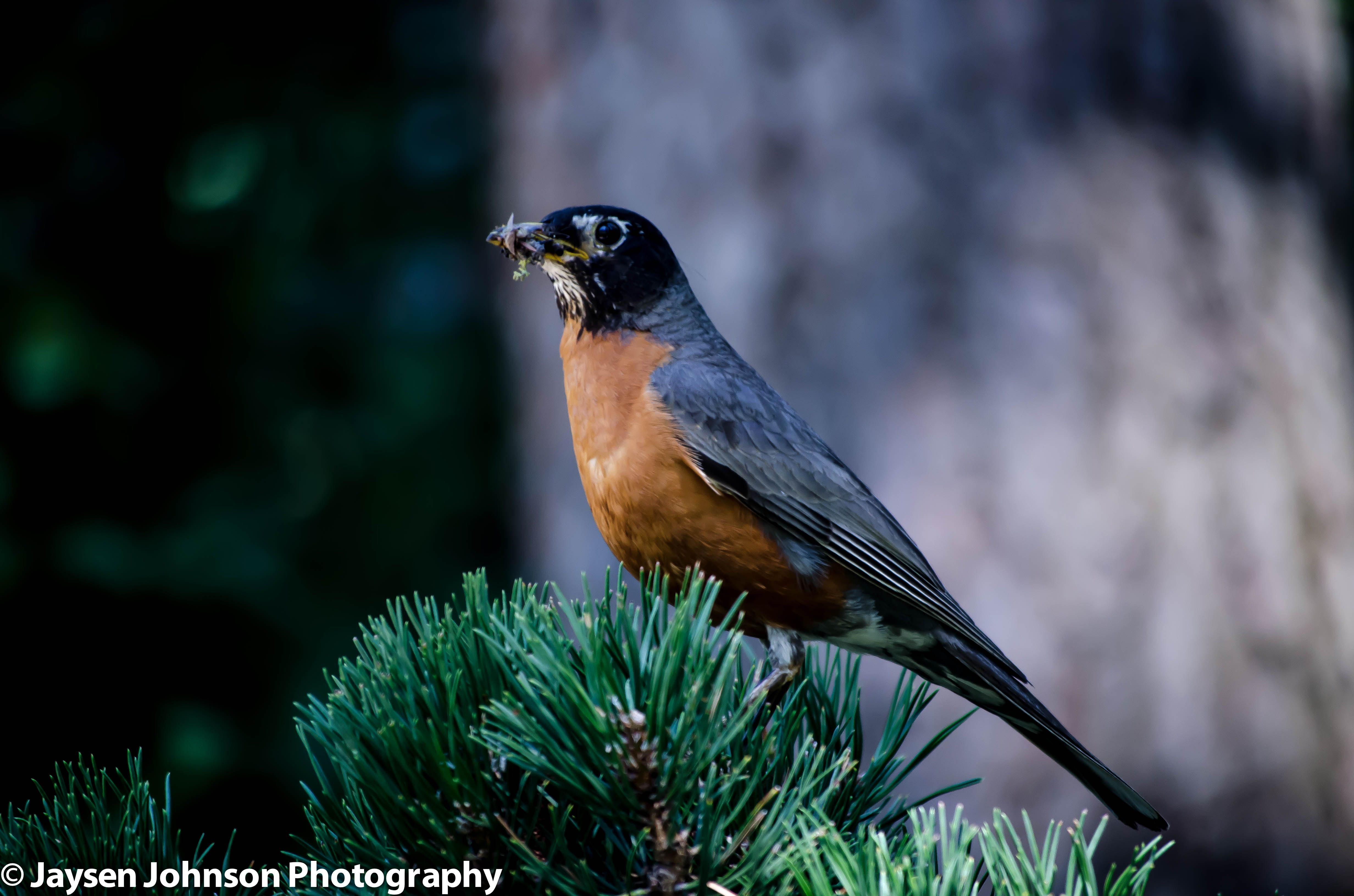 Bird in Japanese Gardens.  Spokane, WA
