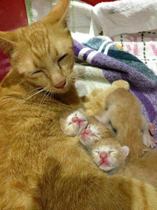 「LOVE」おしゃれまとめの人気アイデア|Pinterest |Lisa Vecchio かわいい子猫、子猫、猫
