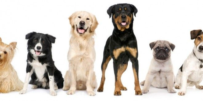 How to choose a pet dog guidelines?