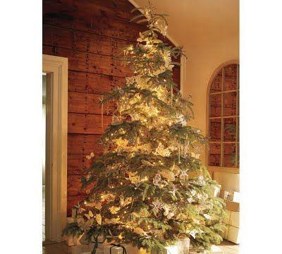 winter...christmas trees