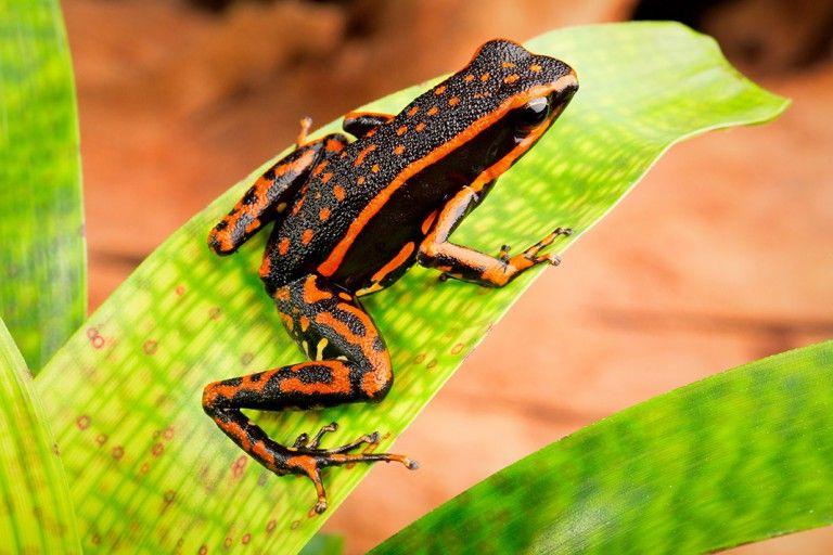 10 grenouilles à la beauté surprenante | Daily Geek Show