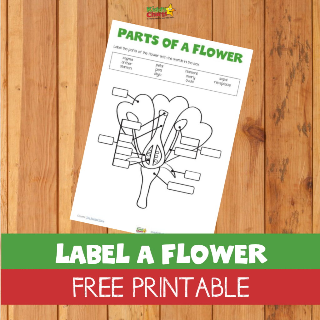 Our Free Label A Flower Printable Is A Great Guide To How