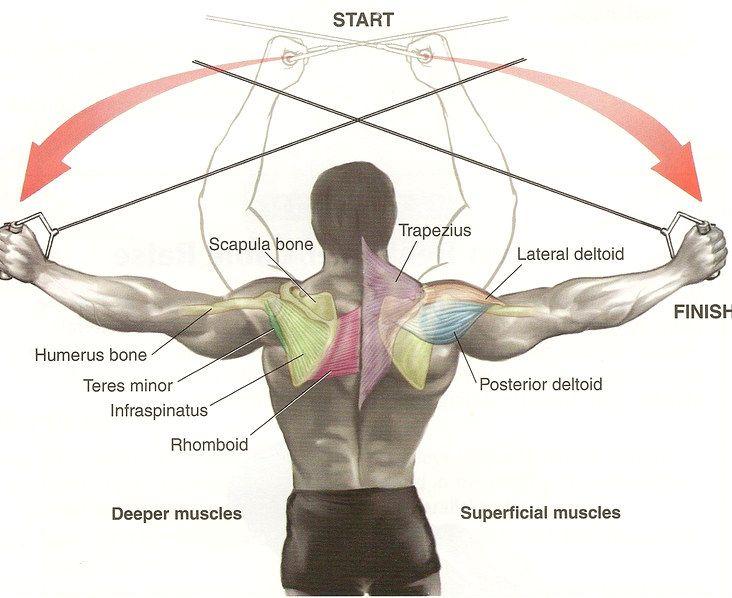 rear deltoid exercises...gotta target the bra area ...