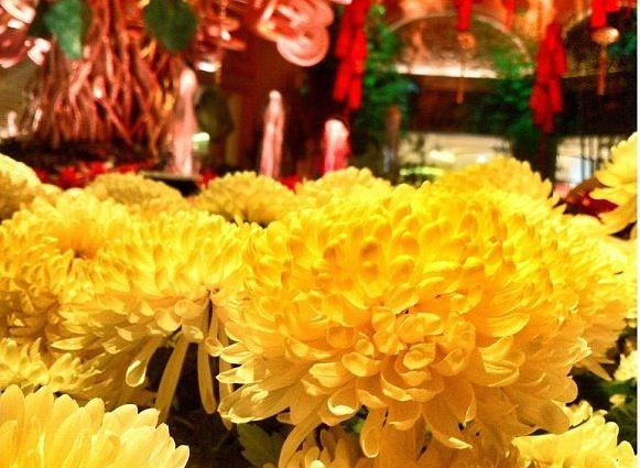 This flower often seeing around Vietnamese New Year in ...