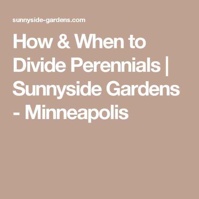 How U0026 When To Divide Perennials | Sunnyside Gardens   Minneapolis