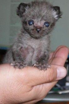 How To Hand Raise Bottle Feed Newborn Kittens Gatos Bellos