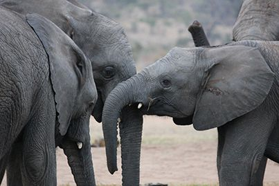 """""""So I guess you're wondering why I called you here?"""" A group gathering of Camp Jabulani's younger herd members."""