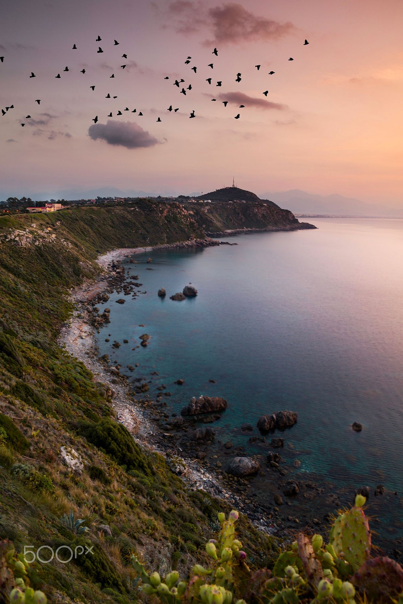 A flock of birds - A flock of birds captured in a beautiful place called Milazzo, Sicily in Italy.
