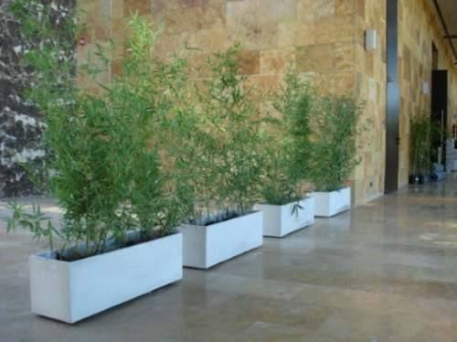 Ca a de bambu planta jardineria pinterest bamb - Jardineras con bambu ...