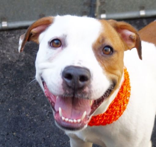FLICKR A1066864 Nyc dogs, Animals, Animal shelter