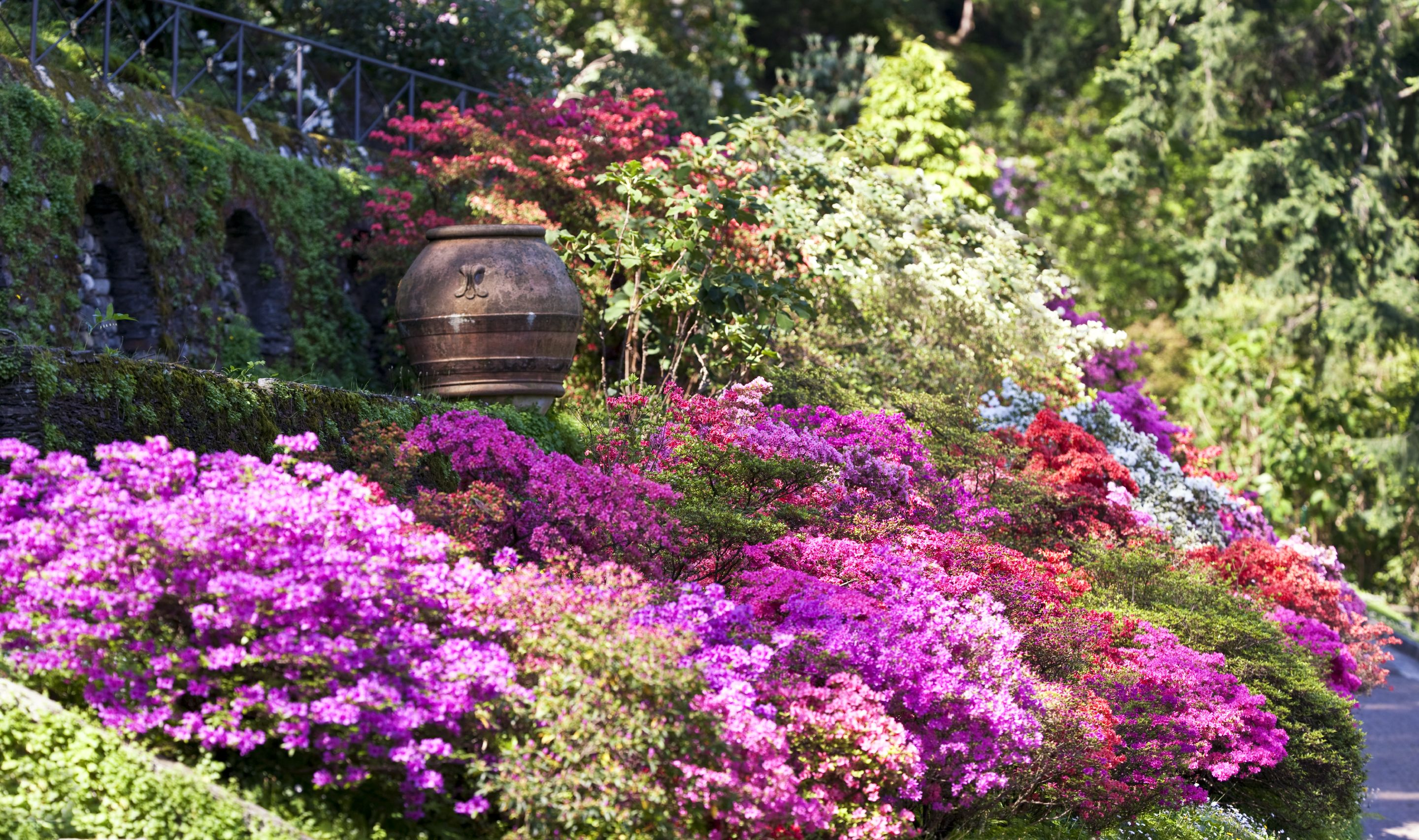 The All Inclusive Guide To Blooming Azaleas Plants