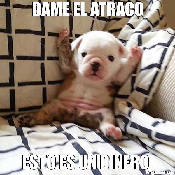 Memes De Perros Graciosos Con Chistes Muy Divertidos Animales Hoy Memes De Perros Graciosos Memes Perros Perros Graciosos