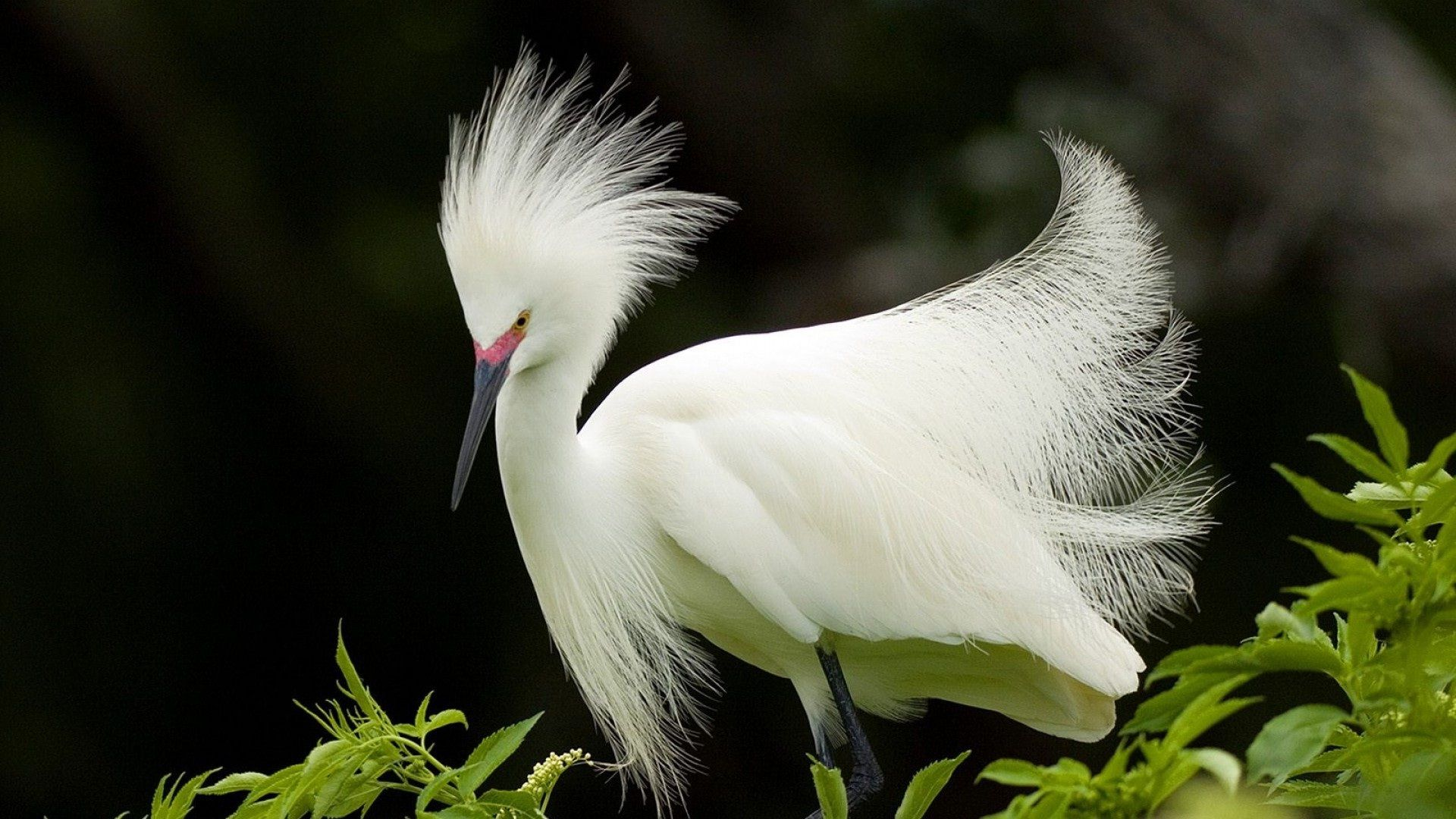 White Beautiful Bird Most Attractive Wallpapers