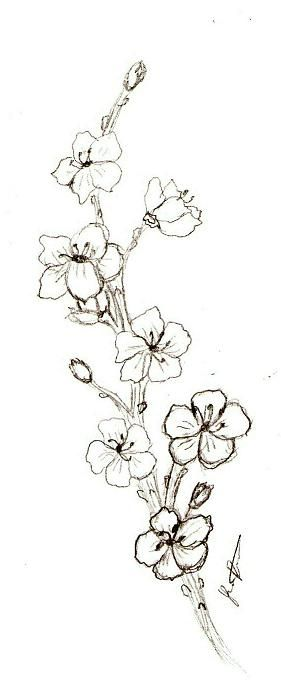 Google Image Result For Http Www Deviantart Com Download 49908899 Cherry Blossom By Shado Cherry Blossom Drawing Flower Tattoo Drawings Cherry Blossom Tattoo