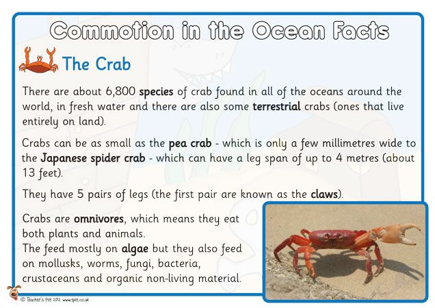 Commotion in the ocean posters fabulous child friendly for Soil facts ks2