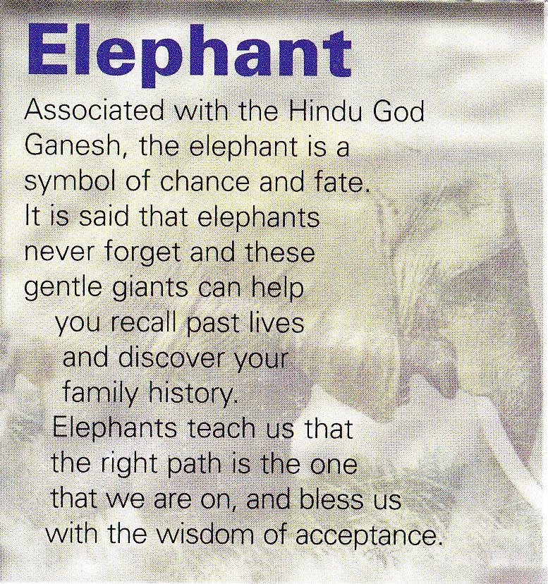 Elephant Spirit Guide Elephants Pinterest Totems Animal And