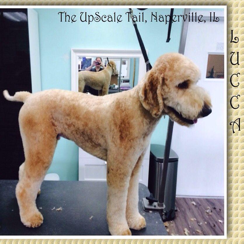 The Upscale Tail Pet Grooming Salon Www Theupscaletail Com Pet Grooming Salon Pet Grooming Grooming Salon