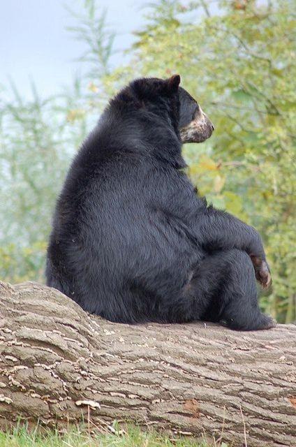 Image D Ours Brun 21 photos d'ours en train de réfléchir au sens de la vie. on est