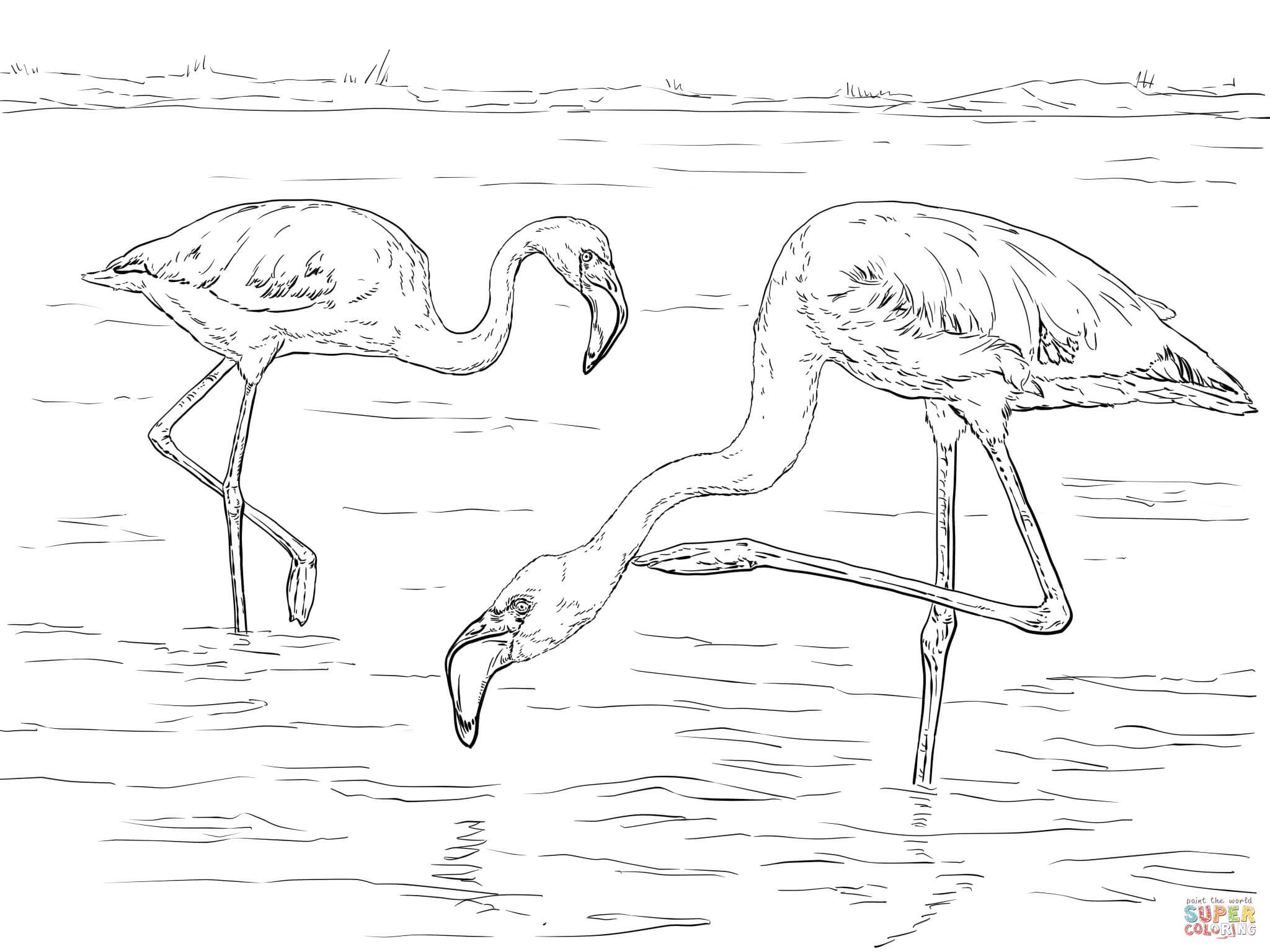 Two Lesser Flamingos coloring page Free Printable