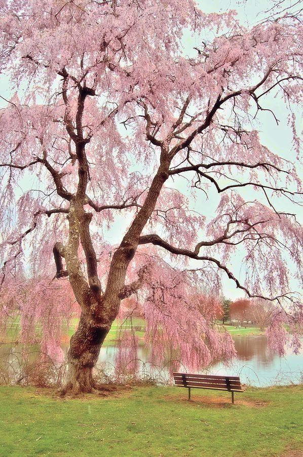 Homldel New Jersey Holmdel Park Beautiful World Beautiful Nature