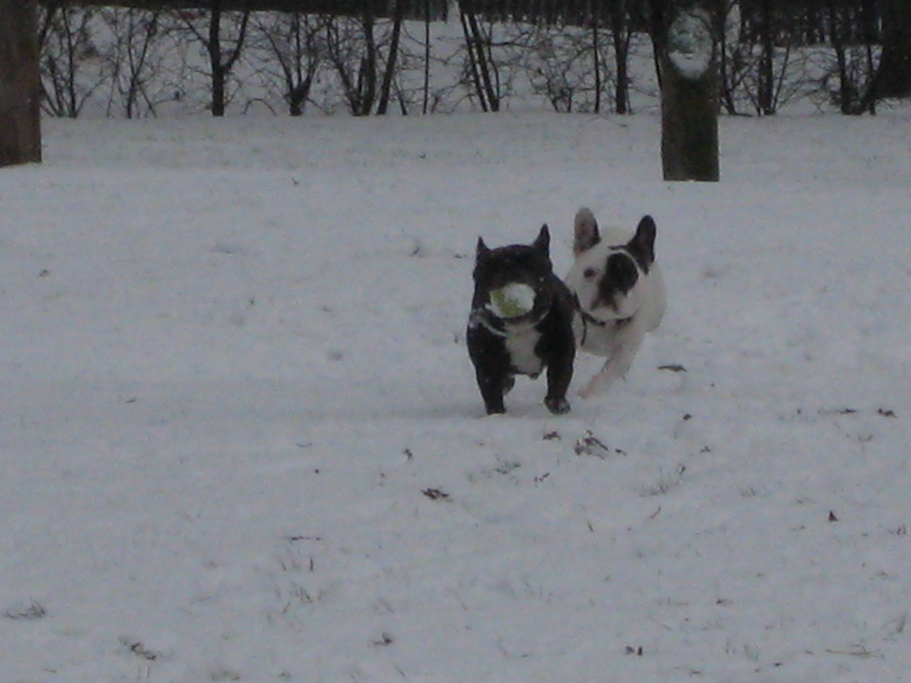 ball running in the snow