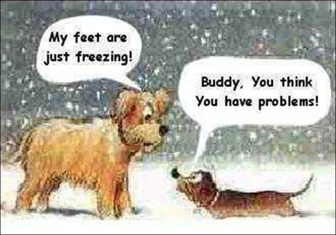 My Feet Are Freezing Quotes Quote Winter Funny Quotes Humor Winter Quotes Funny Christmas Pictures Funny Dachshund Cartoon Jokes