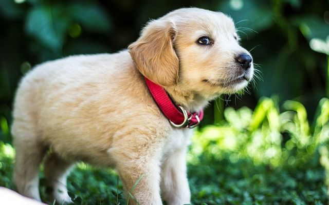 Stop Puppy Biting Fast Dog Tips Puppy Facts Puppies Dogs