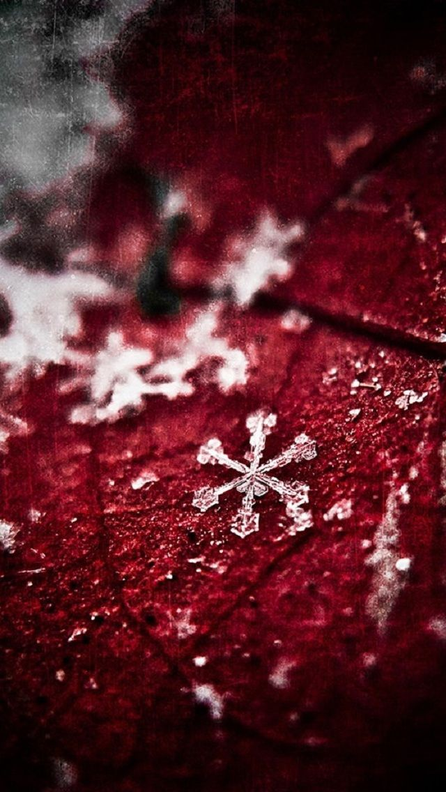 My Iphone 5 Wallpaper The One I Just Liked Snowflakes Winter Wonder Winter Beauty