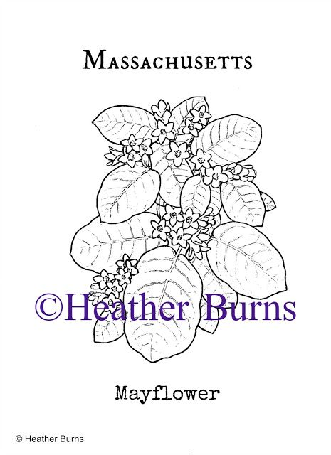 Massachusetts Mayflower Coloring Page Coloring Books Cartoon