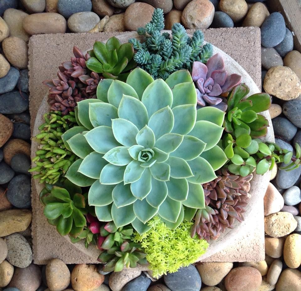 Nice succulent arrangement by Chicweed Patio & Garden | Table Decor ...